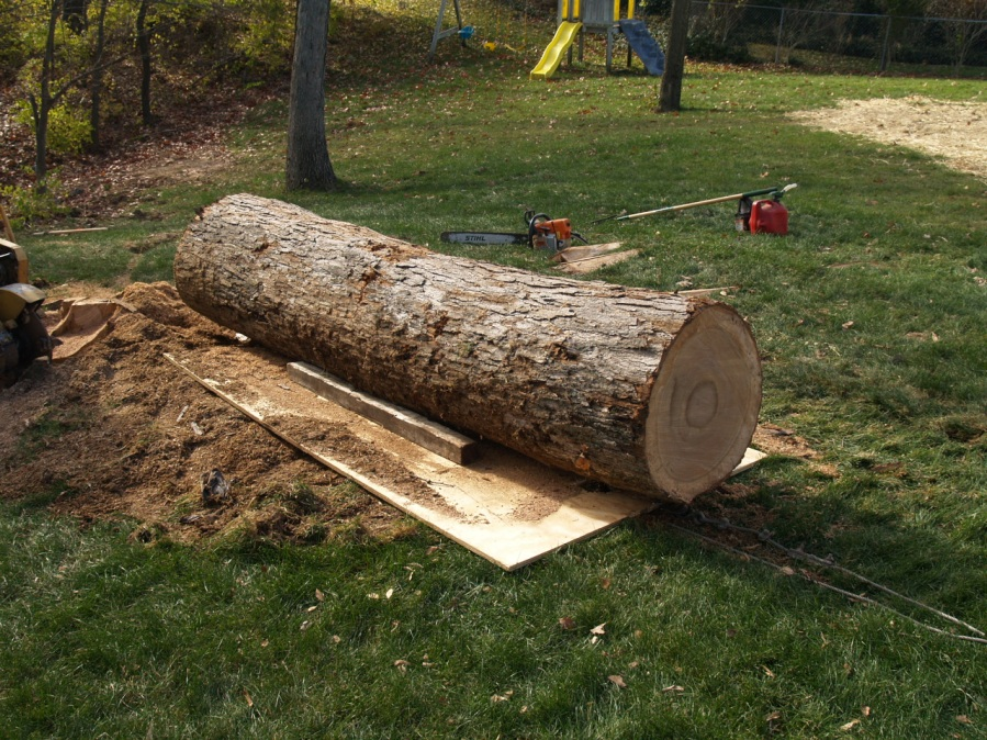 This white oak log is ready to slide up the lawn.