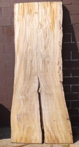 "This American Elm slab shows two branches that are parallel to each other and separated by bark. Notice that the ""crotch"" area has no special figure and is really two separate pieces. This slab is leaning against the wall opposite of the way it grew (the branches are pointing towards the ground)."